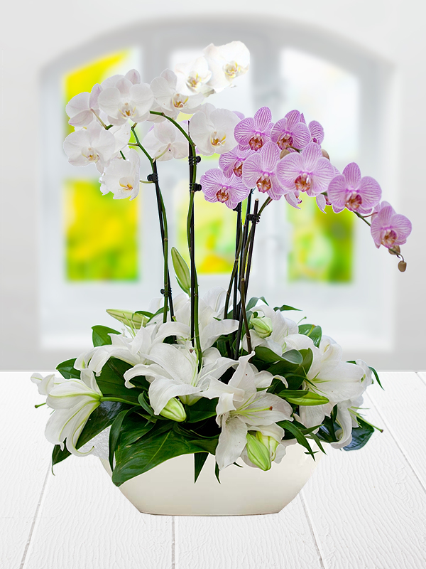 Vip orkide sipari i i ek i for Salon cicekleri yapay